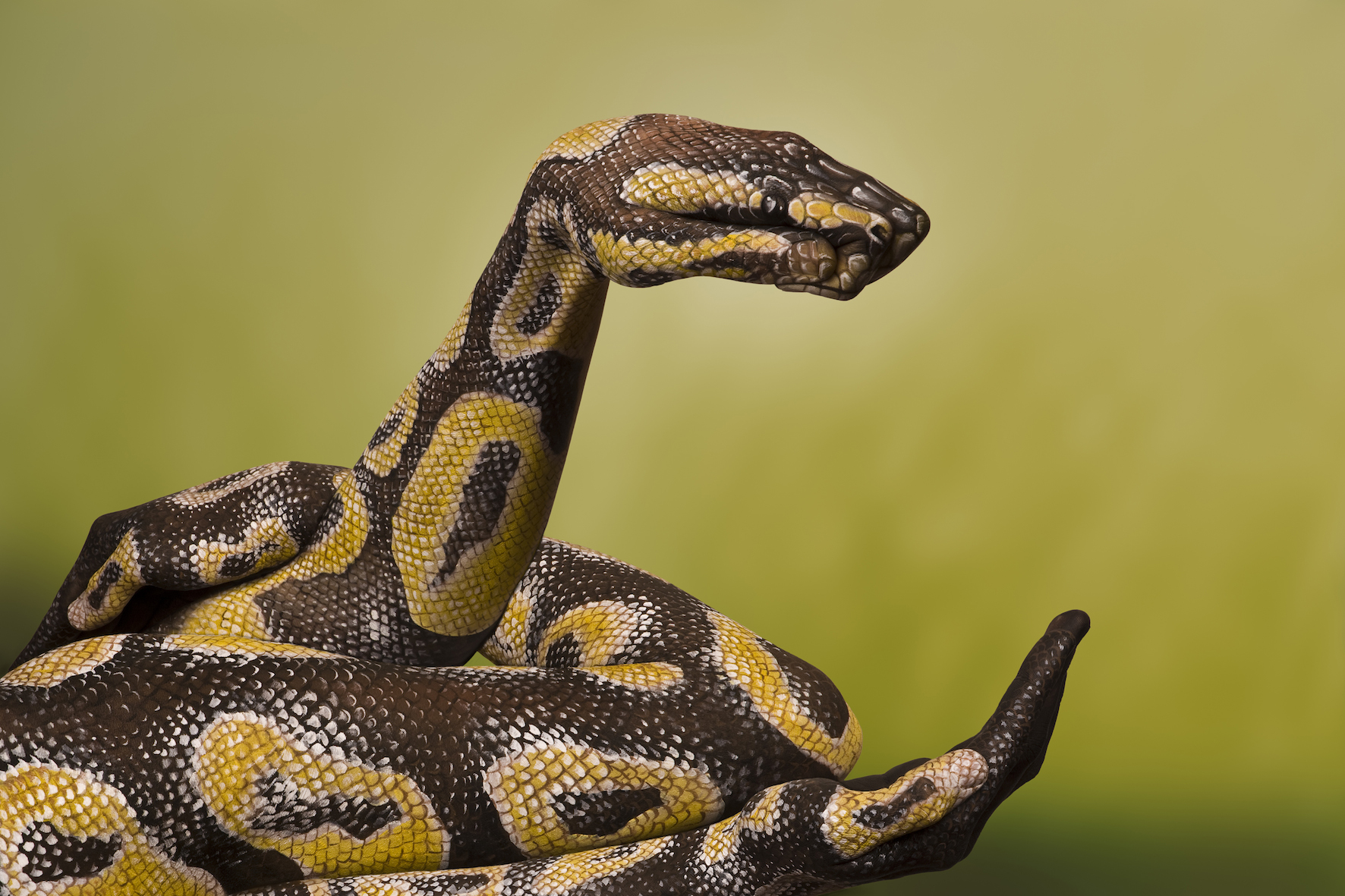 """""""Python Royale"""" - poslikava roke."""