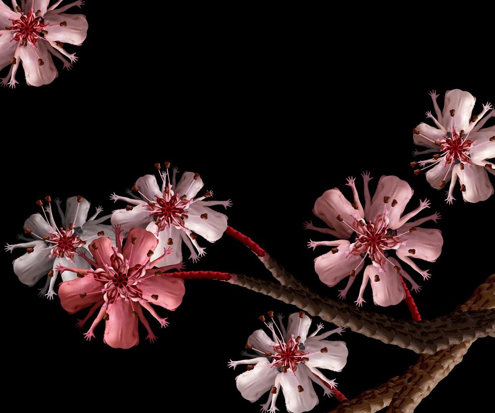 Češnjev cvet.