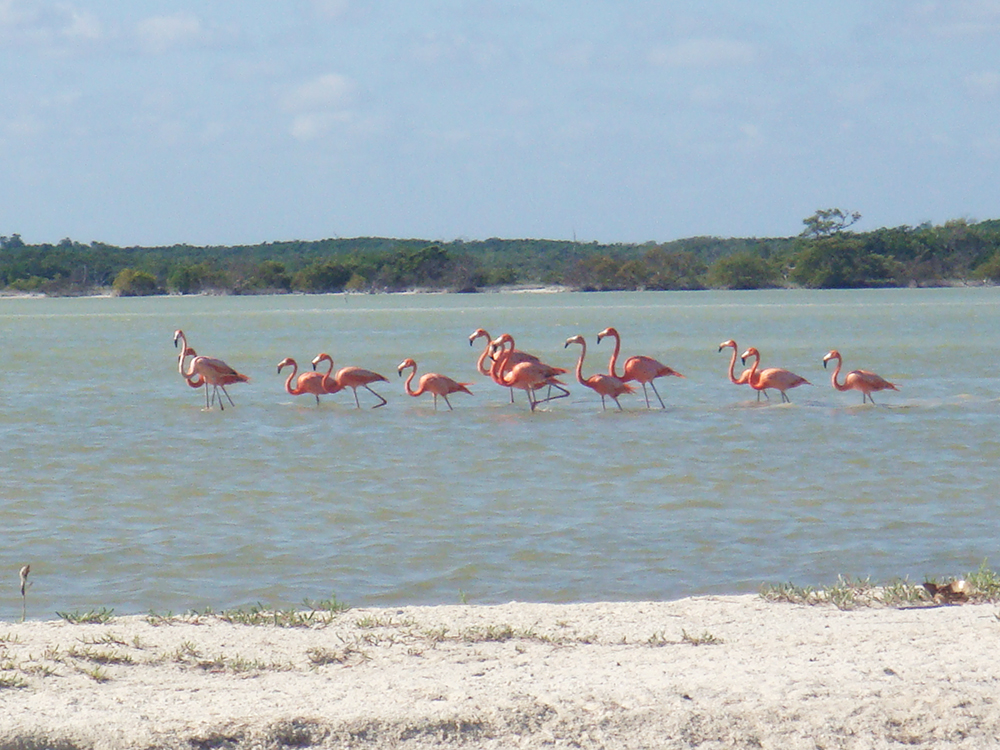 M_flamingos
