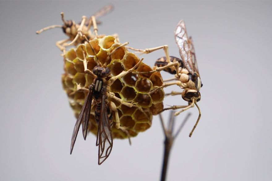 The-Japanese-artist-who-creates-life-size-insects-exclusively-from-bamboo-will-impress-you-59e0884e5918b__880
