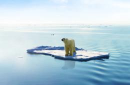 polar-bear-1024x586 copy